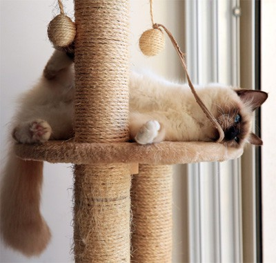 Cat on playing on cat tree.