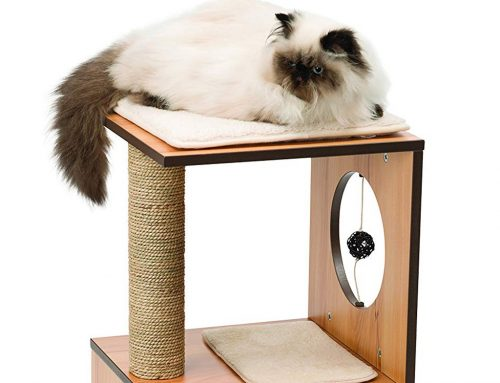 Find the Best Wooden Cat Tree for Stability and Style
