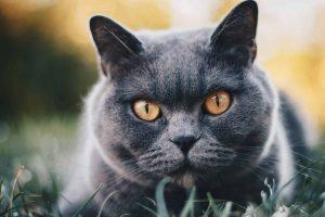 Kitty Camera Collar Image