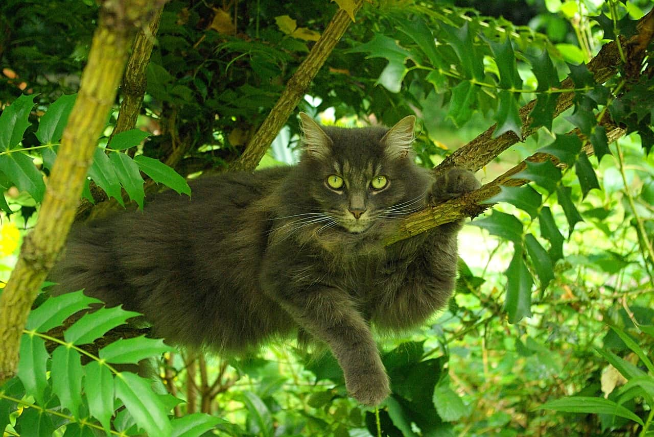 Cat on Tree Outdoors