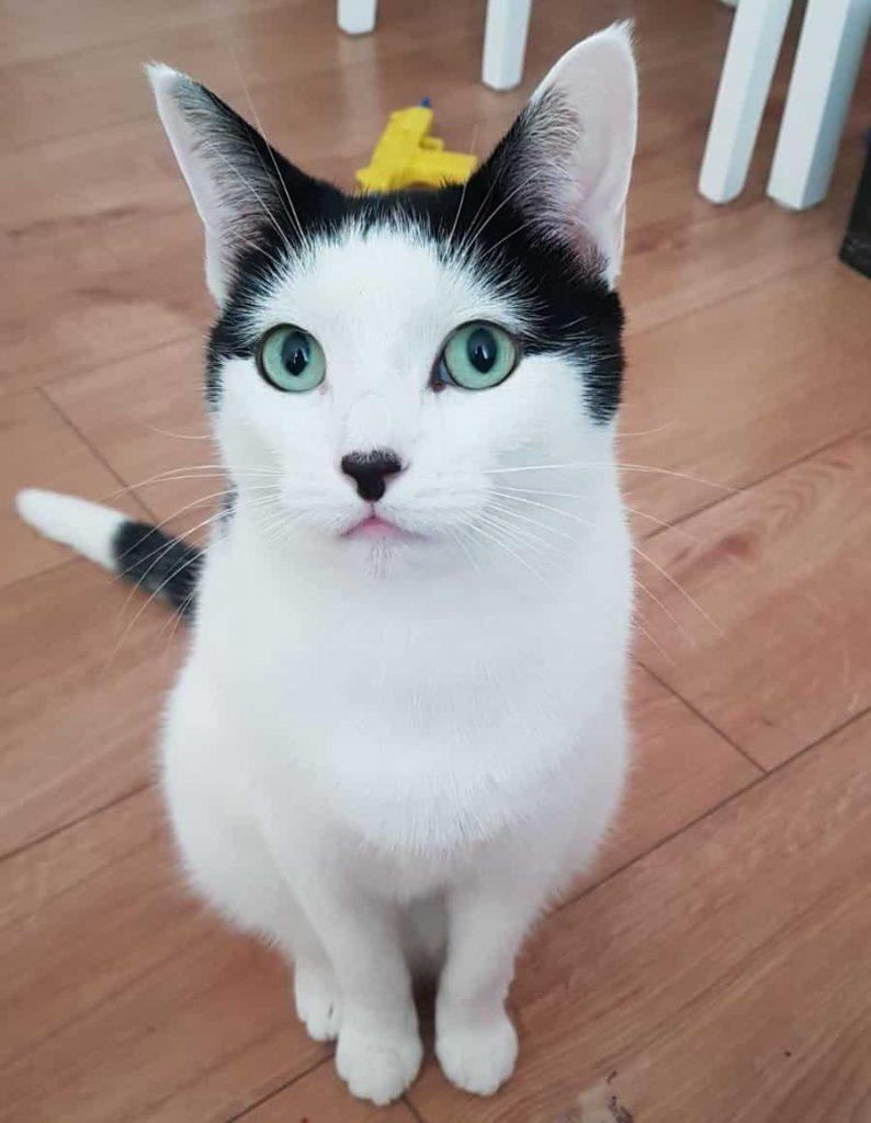 My Cat Yoshi