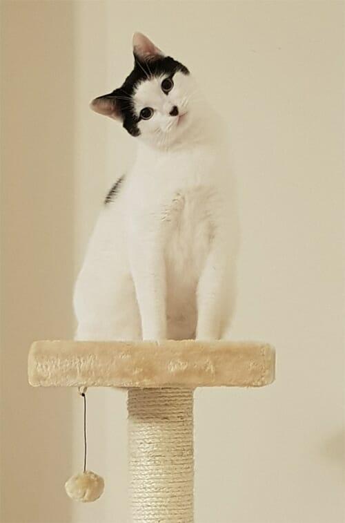 Armakat Cat Tree