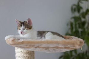 How To Build A Great Cat Tree in 3 Easy Steps