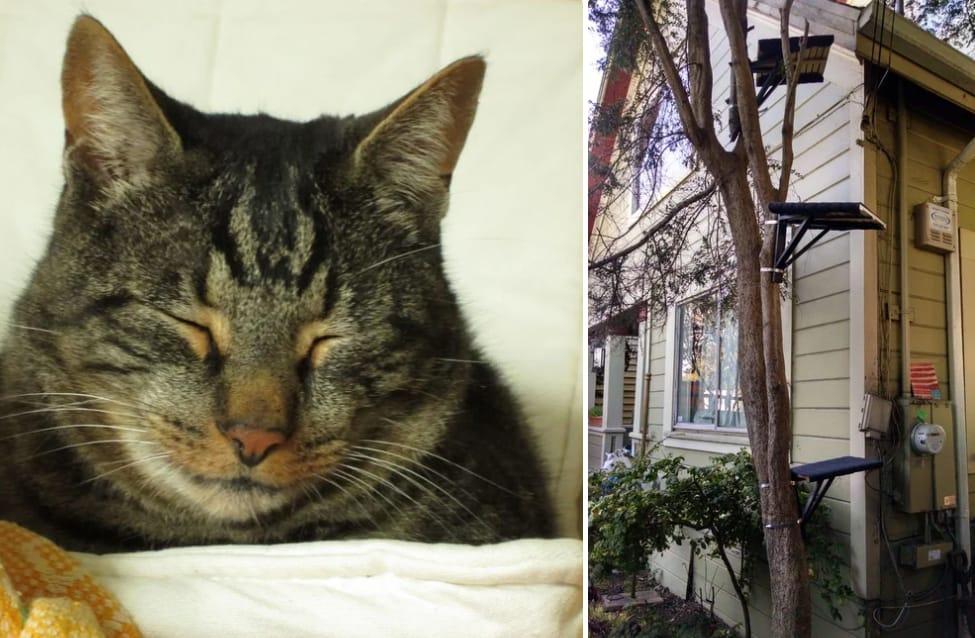 out door diy cat tree