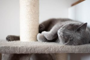 Choosing The Right Scratching Solution for Your Cat