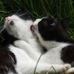 Why Do Cats Groom Each Other and Then Bite?