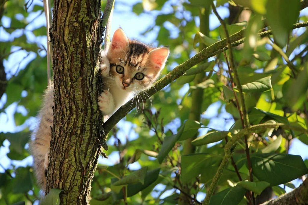 DIY Cat Tree - Real Tree