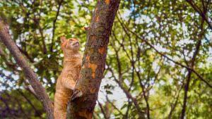 DIY Cat Tree Natural