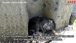 This Story of a Poor Little Kitten Found on the Side of the Road Brought Me to Tears